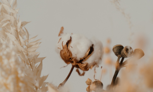 What's The Difference Between Organic Cotton And Regular Cotton?